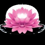 Vinyasa Yoga Vinyasa Yoga (2)